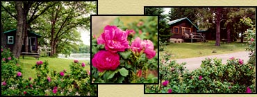 Rose Hedges at Little Pine Resort - Brainerd, Minnesota